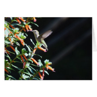 Hummingbird Pictures Greeting Card