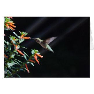 Hummingbird Pictures Card