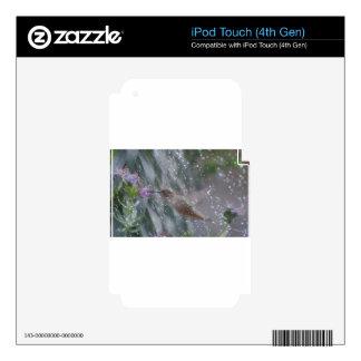 Hummingbird - playing in the rain iPod touch 4G skin