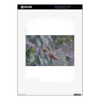 Hummingbird - playing in the rain skins for iPad 2