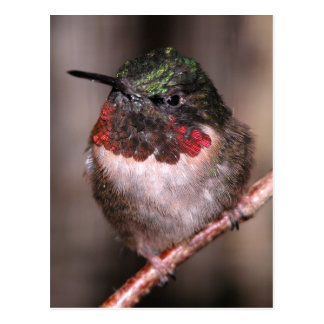Hummingbird Post Card