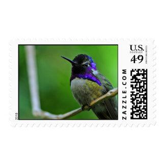 Hummingbird Postage Stamp