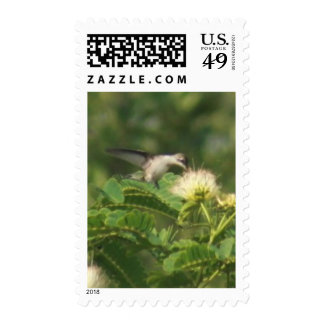 Hummingbird Postage Stamps