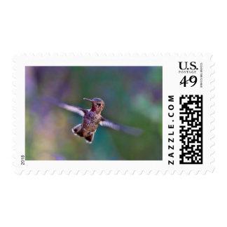 Hummingbird Postage Stamps, $0.49 (1st Class 1oz)