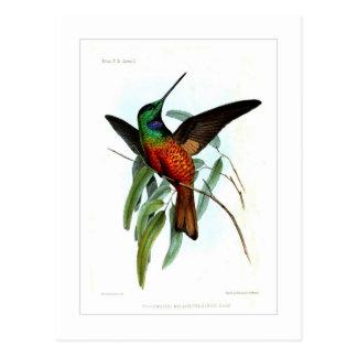 Hummingbird Post Cards