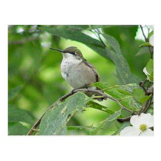 Hummingbird Postcard 4