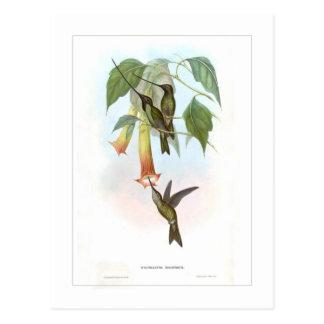 Hummingbird Postcards