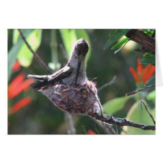 Hummingbird Prepares her Nest Greeting Card