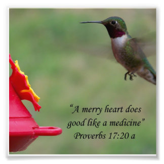 Hummingbird Proverbs 17:20 Bible Verse Photograph