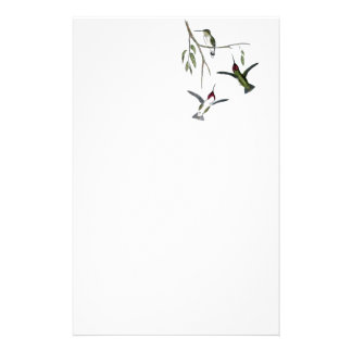 Hummingbird Recycled Stationery