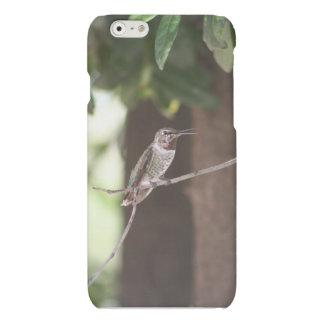 Hummingbird Rest Place in Tucson, AZ Matte iPhone 6 Case