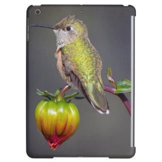 Hummingbird rests on flower bud cover for iPad air