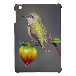 Hummingbird rests on flower bud iPad mini covers