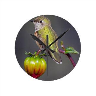 Hummingbird rests on flower bud round clock
