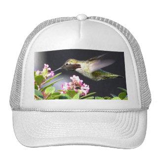 Hummingbird returns mesh hats