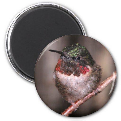 Hummingbird / Round Magnet
