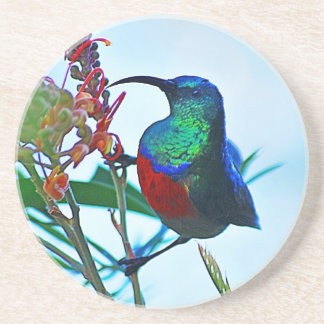 Hummingbird ruby throated beverage coaster