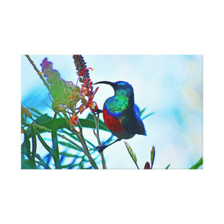 Hummingbird ruby throated canvas print