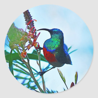 Hummingbird ruby throated classic round sticker