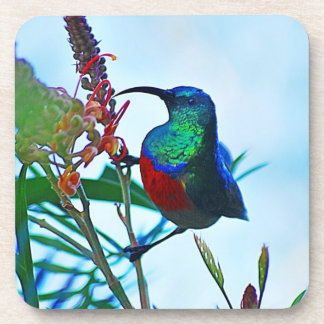 Hummingbird ruby throated drink coaster