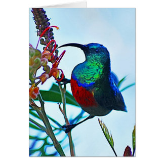 Hummingbird ruby throated greeting card