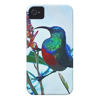Hummingbird ruby throated iPhone 4 case