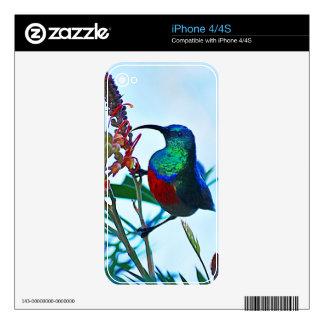Hummingbird ruby throated iPhone 4 decal