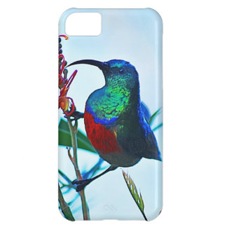 Hummingbird ruby throated iPhone 5C case