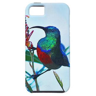 Hummingbird ruby throated iPhone SE/5/5s case
