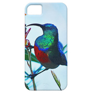 Hummingbird ruby throated iPhone SE/5/5s case