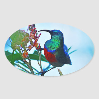 Hummingbird ruby throated oval sticker