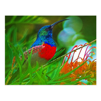 Hummingbird ruby throated postcard