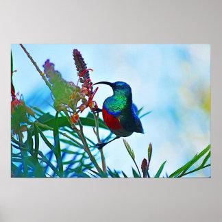 Hummingbird ruby throated poster