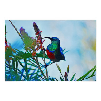 Hummingbird ruby throated posters