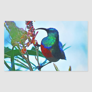 Hummingbird ruby throated rectangular sticker