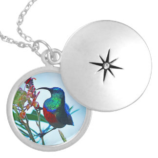 Hummingbird ruby throated round locket necklace