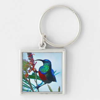 Hummingbird ruby throated Silver-Colored square keychain