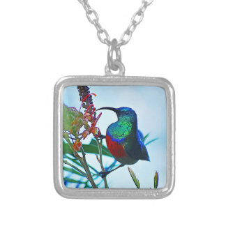 Hummingbird ruby throated silver plated necklace