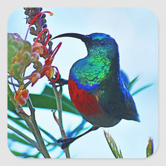 Hummingbird ruby throated square sticker