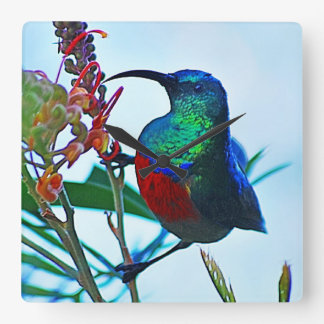 Hummingbird ruby throated square wall clocks