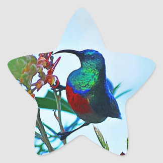 Hummingbird ruby throated star sticker