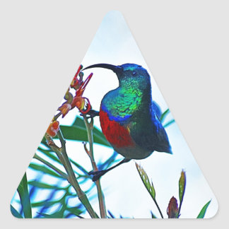 Hummingbird ruby throated triangle sticker