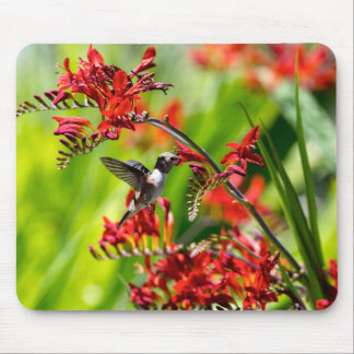 Hummingbird Rufous getting nectar from flowers Mouse Pad