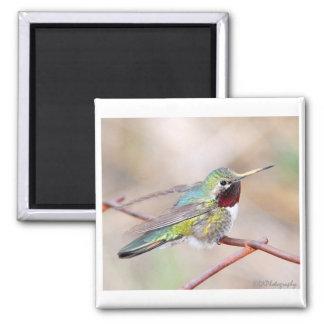 Hummingbird Series Magnet