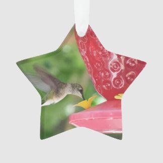 Hummingbird Sipping