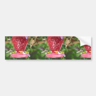 Hummingbird Sipping Bumper Sticker