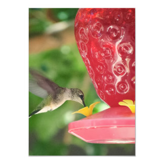 Hummingbird Sipping Card