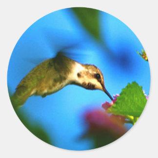 Hummingbird Sipping Classic Round Sticker