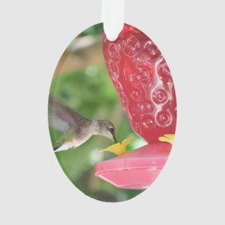 Hummingbird Sipping Ornament