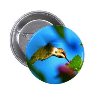 Hummingbird Sipping Pinback Button
